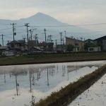 田んぼに水が入り、カエルの大合唱が間近な季節到来