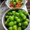 緑色ミニトマトは赤くなるの?