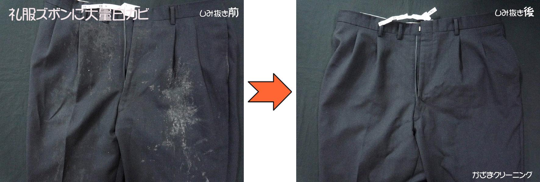 礼服ズボンに大量のカビ